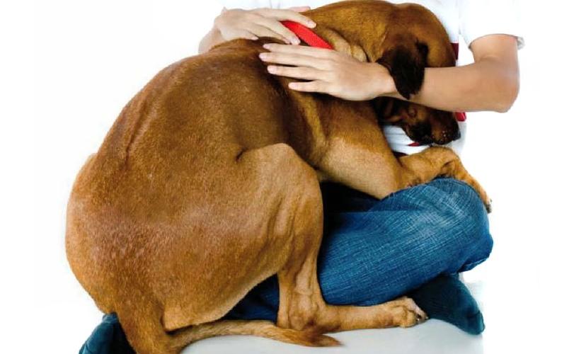 Los perros sufren con el ruido de la pirotecnia